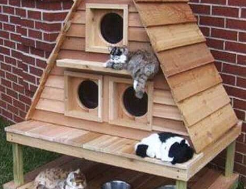Een dierenhok van pallets voor je hond of kat